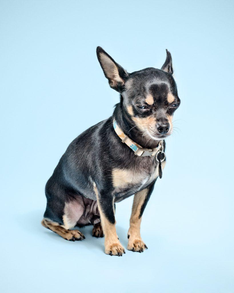 Chihuahua-020_Master